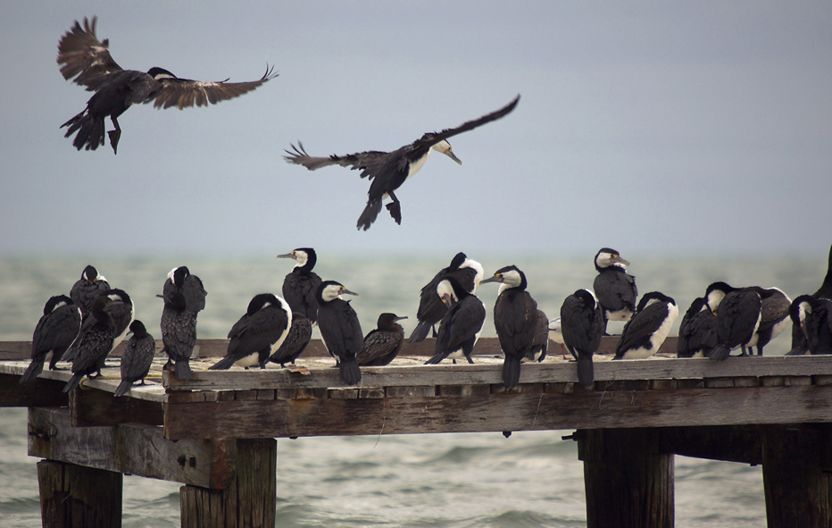 27 shags on a jetty
