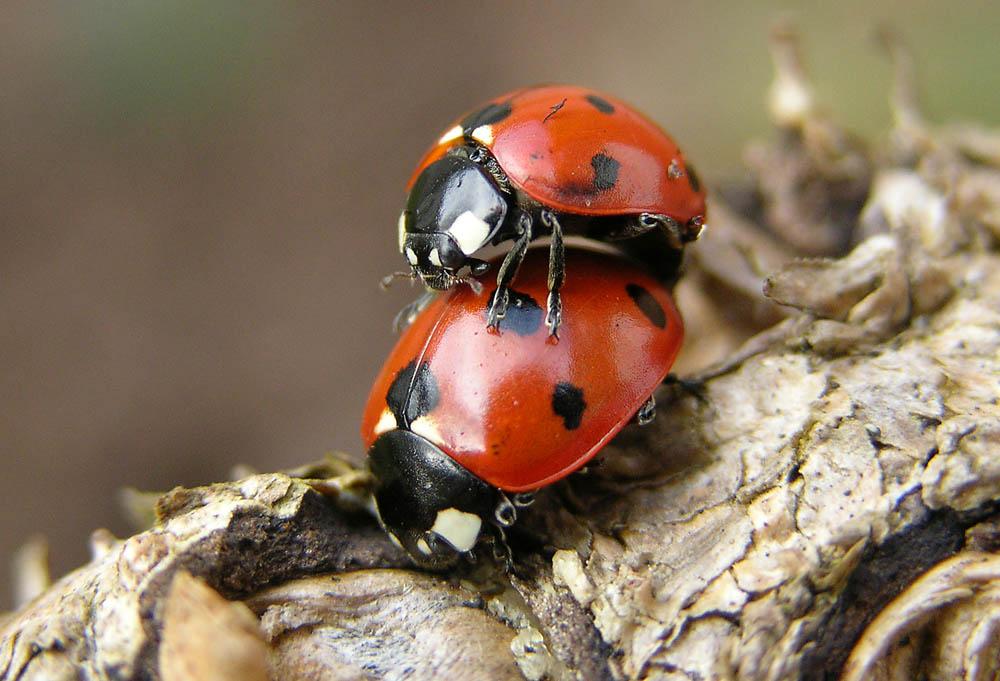 Bug Luv